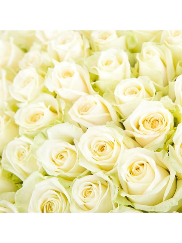 Букет от Бели Рози без опаковка на невероятната цена от 19.99 лв