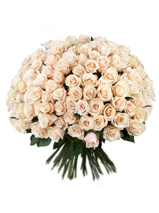 Поръчай Букет от 101 Кремави Рози за цена 199.99