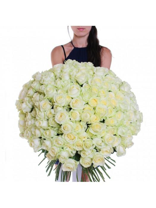 Поръчай Букет от 101 Бели Рози - безплатна доставка в София и Пловдив