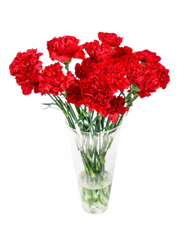 send to bulgaria 19 red carnations bouquet
