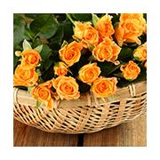 Roses Baskets