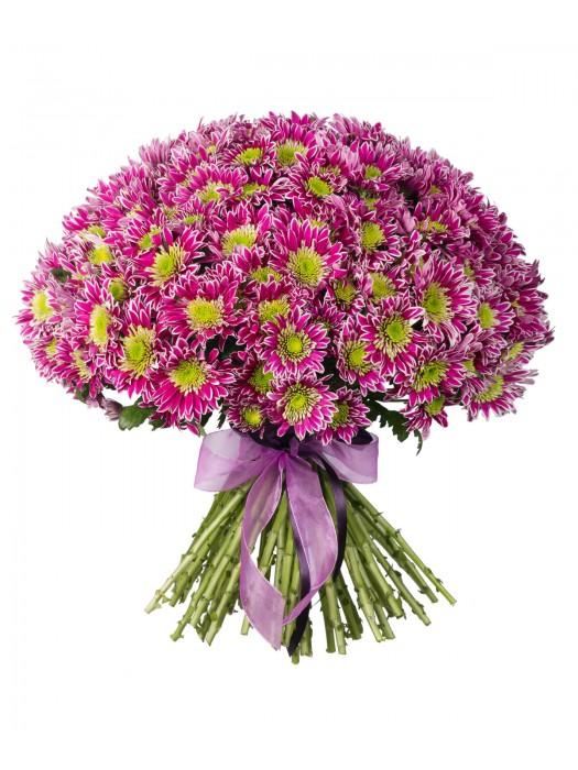 Букет от Розови Хризантеми на невероятната цена от 29.99 лв