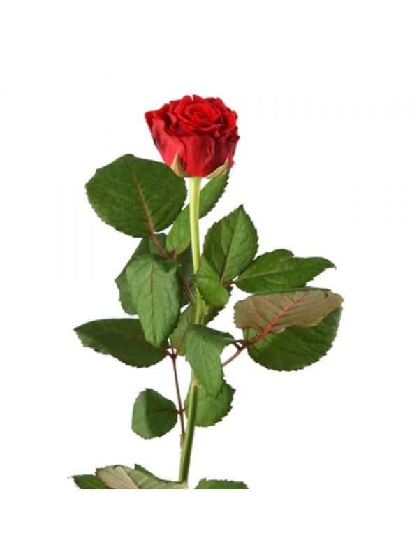 5 Класически червени рози и Рафаело