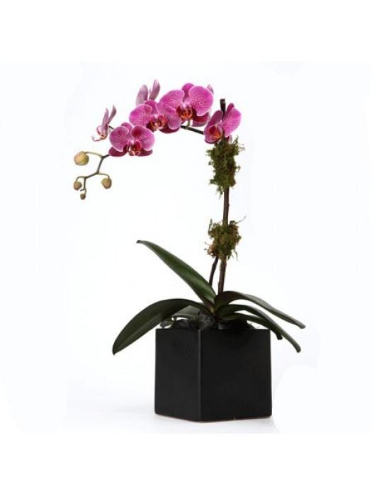 Виолетова орхидея в кашпа